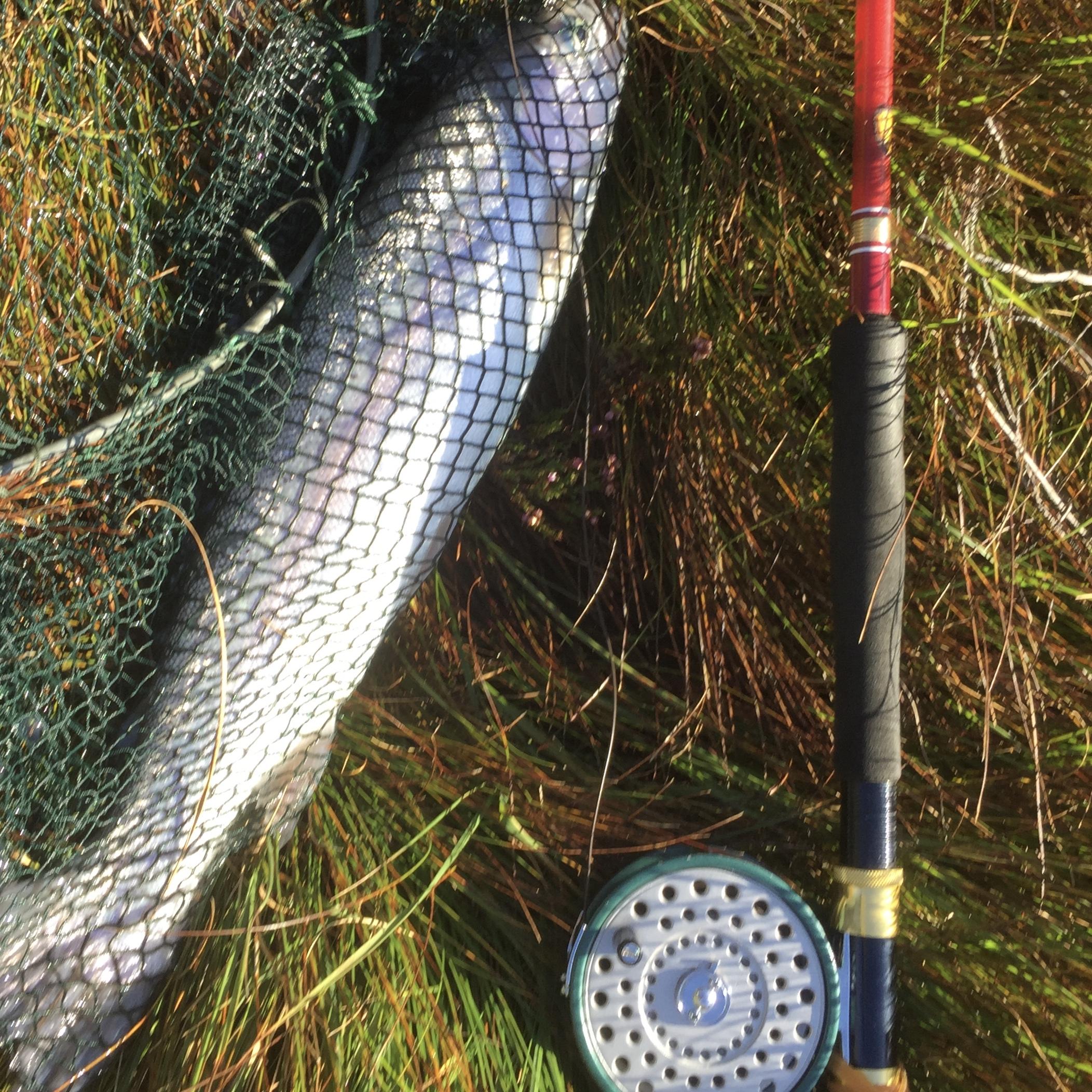 Daiwa  fishing fish pick 85 327 664 can not be selected colors